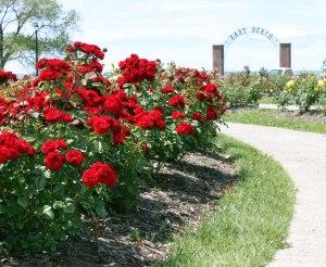 rose-garden-pictures-9dhpevz1